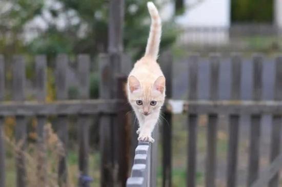 奥运冠军冲刺速度仅相当于家猫四条腿为啥跑得更快